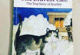 The Bravest Cat